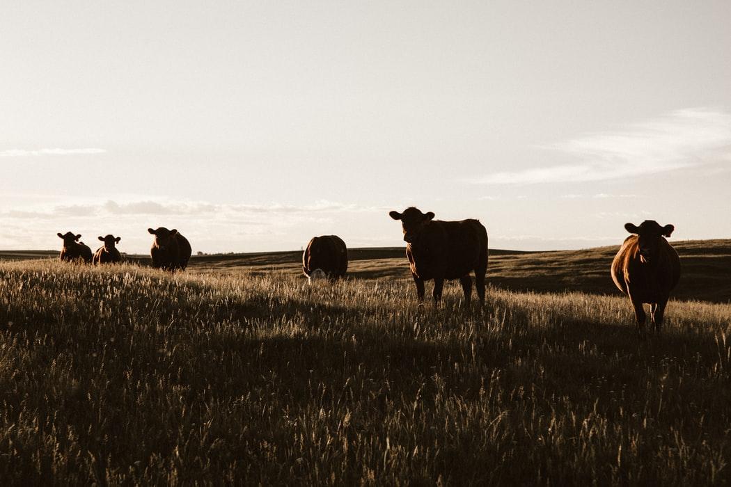Farm to fork: secondo uno studio Usa la nuova politica agricola Ue costerà 58 miliardi di Pil e una perdita del 20% dell'export