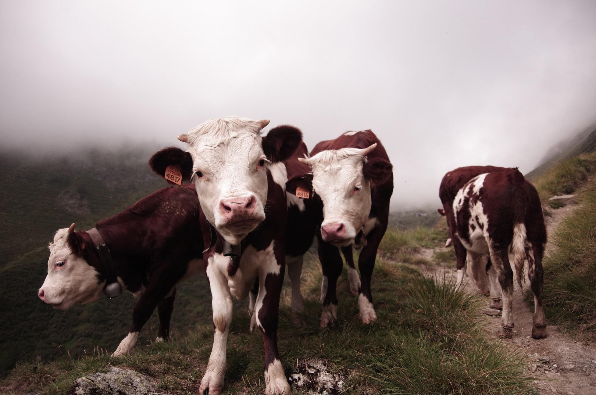 Farm to Fork: il video appello della zootecnia per raccontare nove cose che non vanno nel piano per l'agricoltura Ue