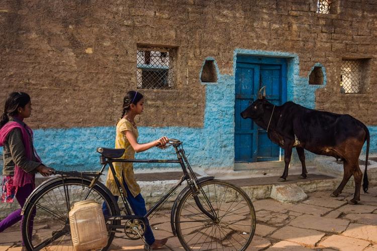 India: i formaggi italiani inciampano sul caglio animale