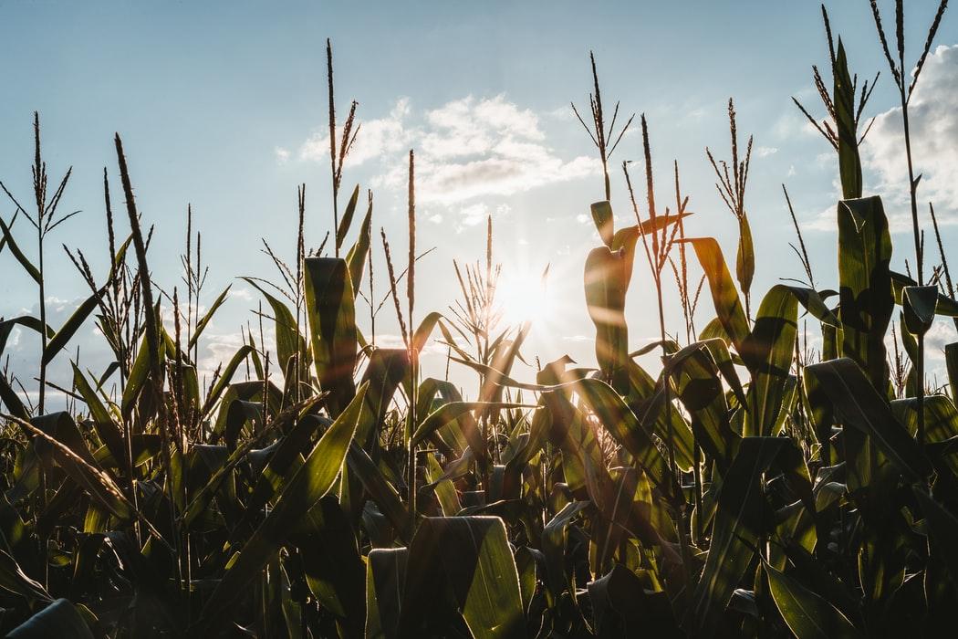 Ue, spiragli per le biotecnologie in agricoltura. Al via la consultazione con gli stati membri per un nuovo regolamento