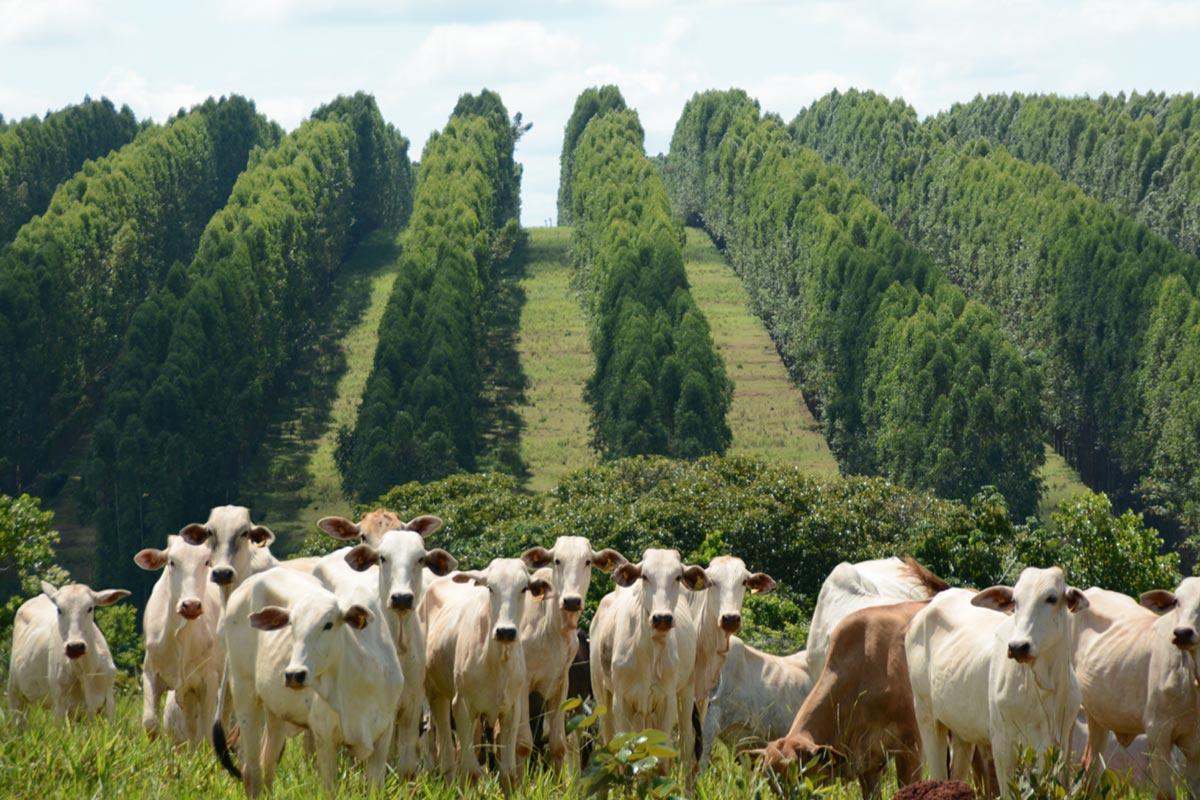 Ifcn Dairy Forum: l'aumento della produzione di latte diminuirà le emissioni di gas serra