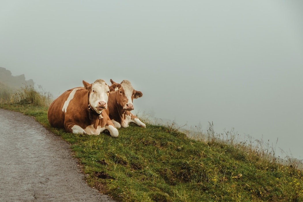 Mercato trade: domanda sempre più fiacca. Scendono i prezzi del latte. E si torna a far formaggio